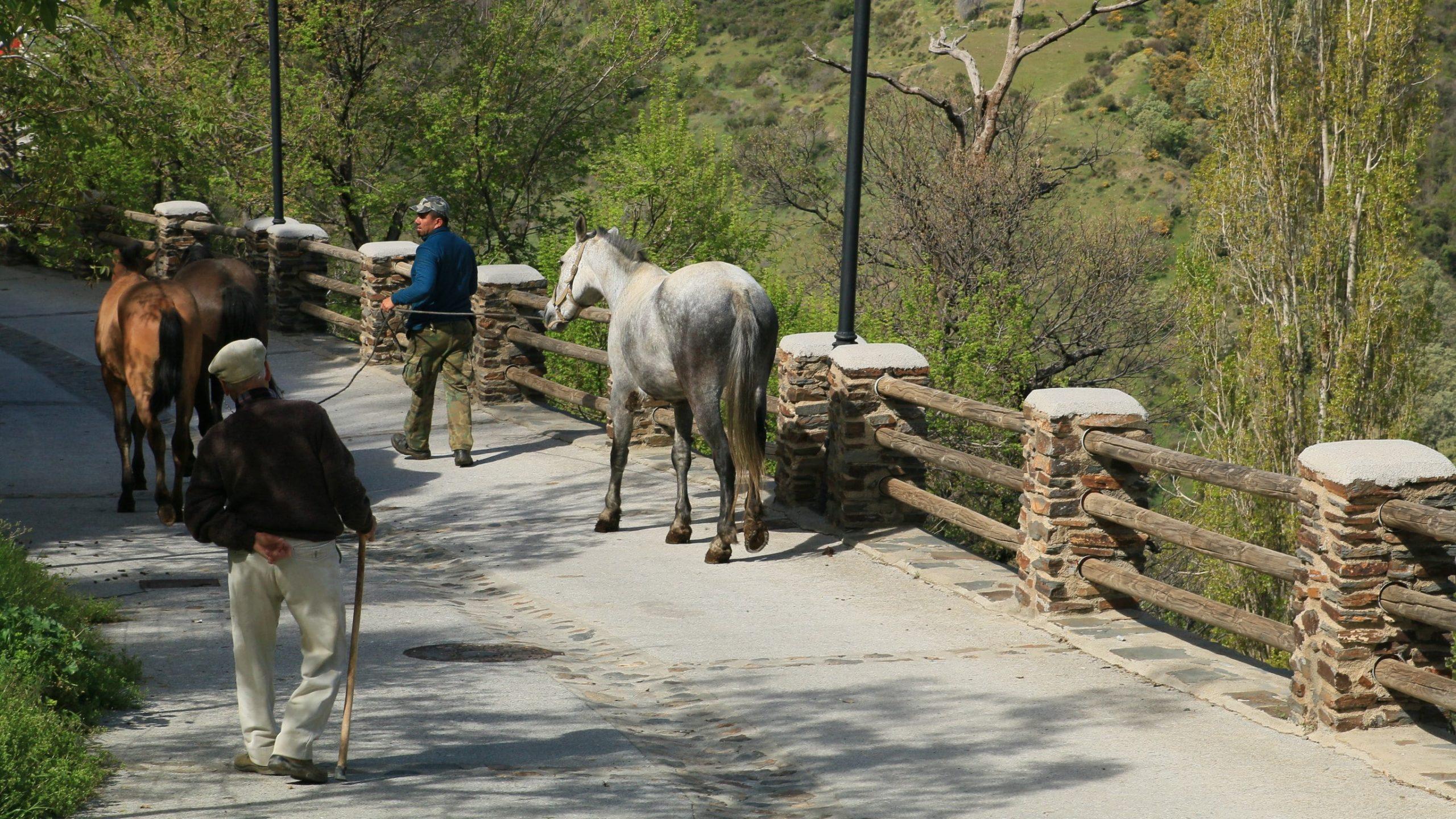 Rich results on google´s SERP when searching for la Cebadilla wandeling