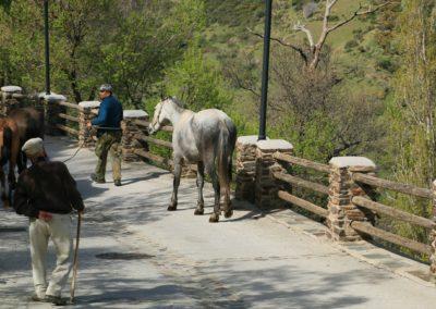 Paarden in de Alpujarras